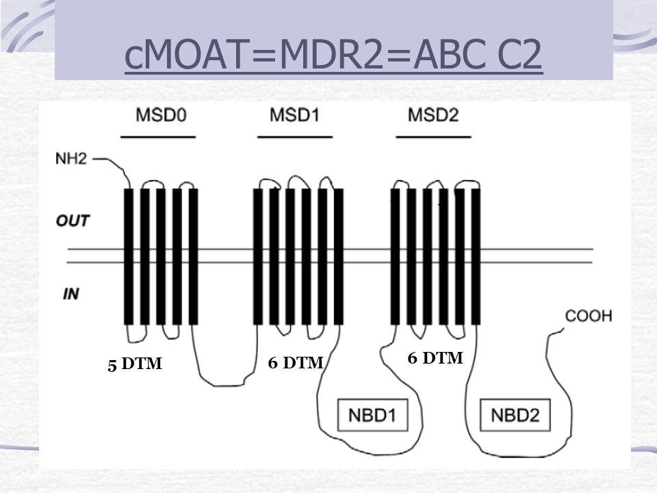 cMOAT=MDR2=ABC C2 6 DTM 5 DTM 6 DTM