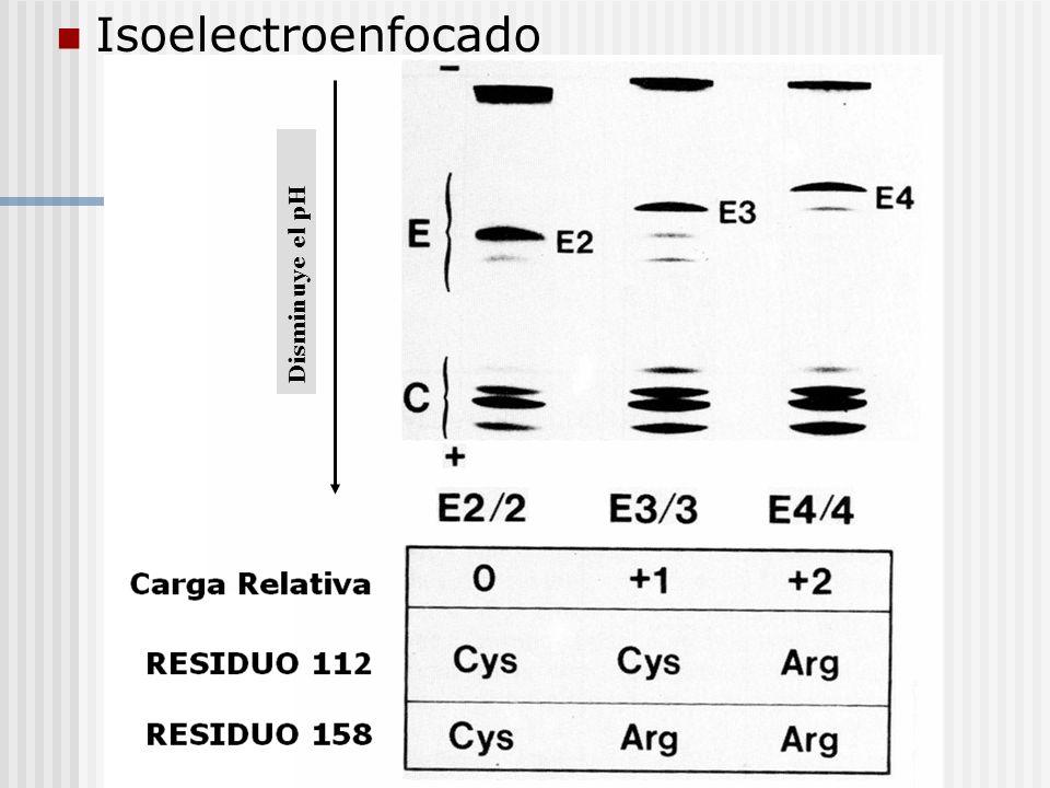 Isoelectroenfocado Disminuye el pH