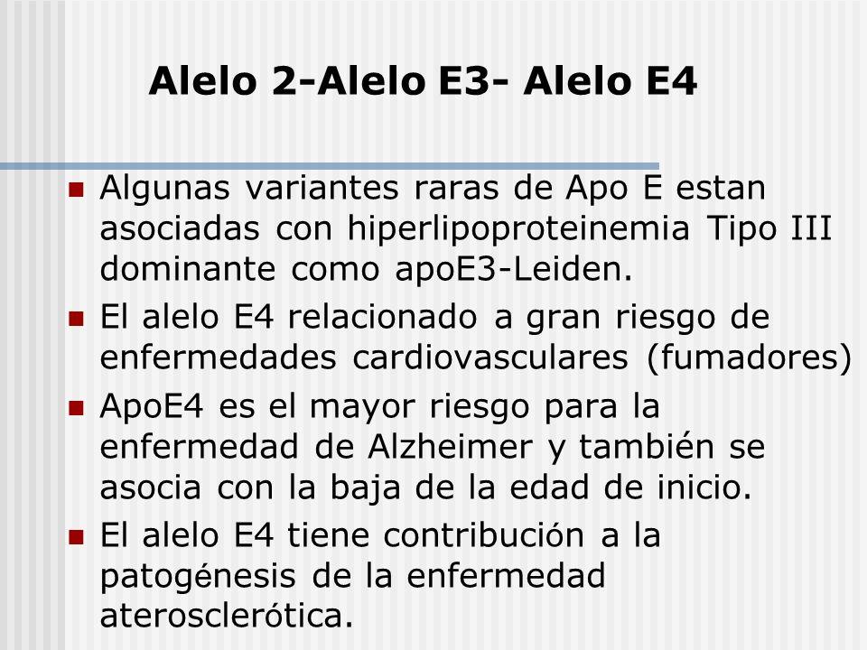 Alelo 2-Alelo E3- Alelo E4 Algunas variantes raras de Apo E estan asociadas con hiperlipoproteinemia Tipo III dominante como apoE3-Leiden.