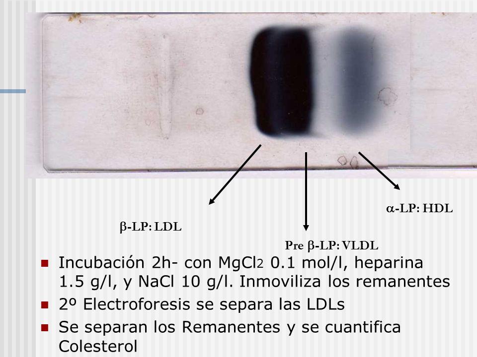 2º Electroforesis se separa las LDLs