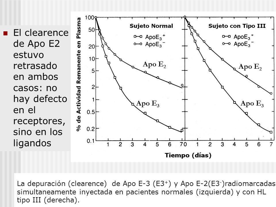 El clearence de Apo E2 estuvo retrasado en ambos casos: no hay defecto en el receptores, sino en los ligandos