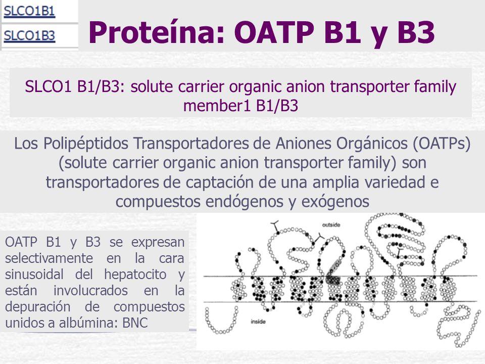 Proteína: OATP B1 y B3SLCO1 B1/B3: solute carrier organic anion transporter family member1 B1/B3.