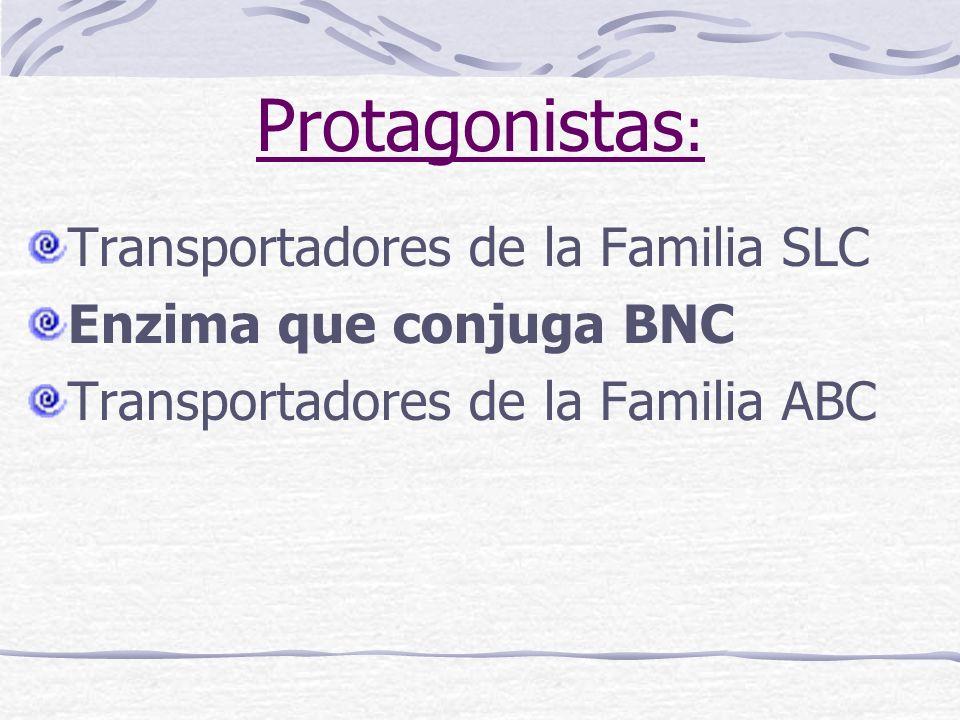Protagonistas: Transportadores de la Familia SLC