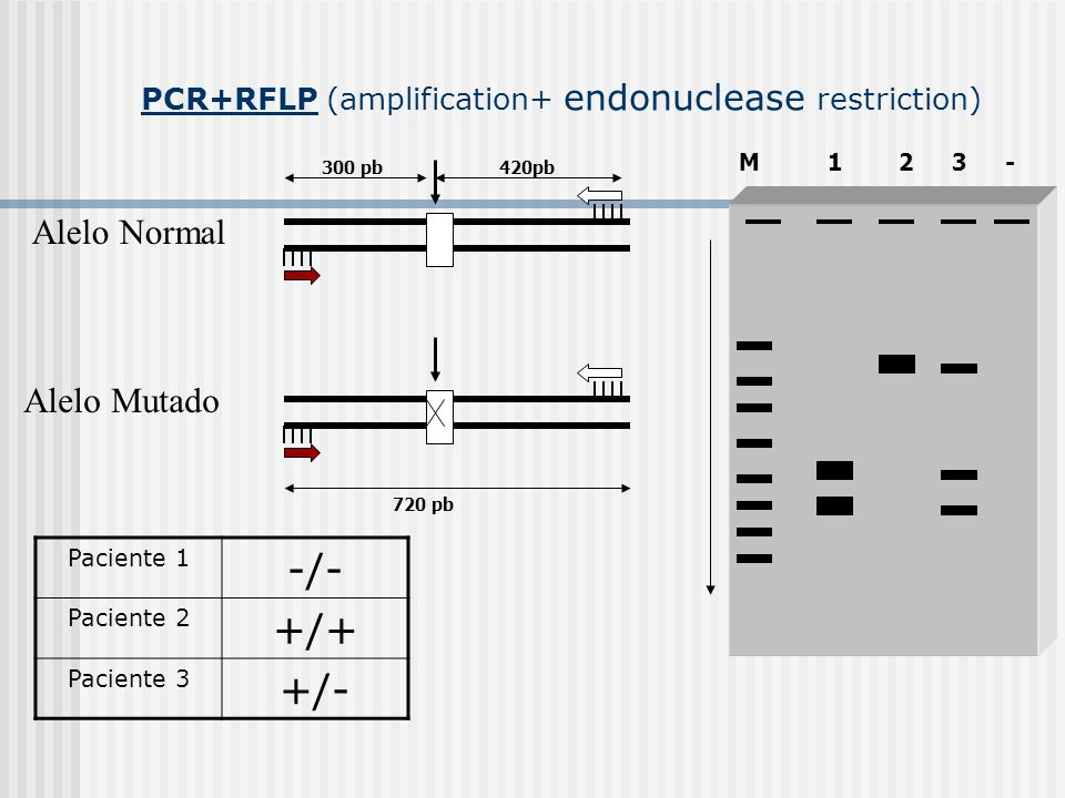 PCR+RFLP (amplification+ endonuclease restriction)
