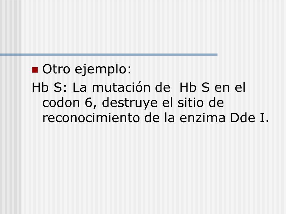 Otro ejemplo: Hb S: La mutación de Hb S en el codon 6, destruye el sitio de reconocimiento de la enzima Dde I.