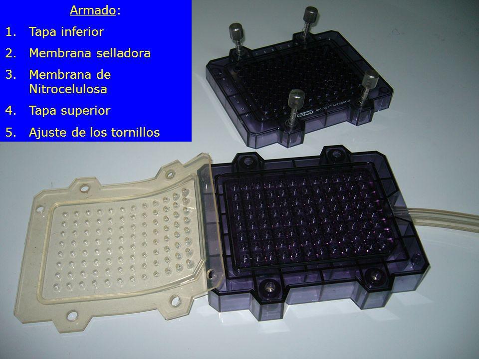 Armado: Tapa inferior. Membrana selladora. Membrana de Nitrocelulosa.