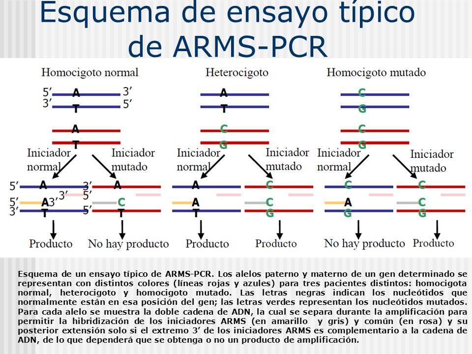 Esquema de ensayo típico de ARMS-PCR