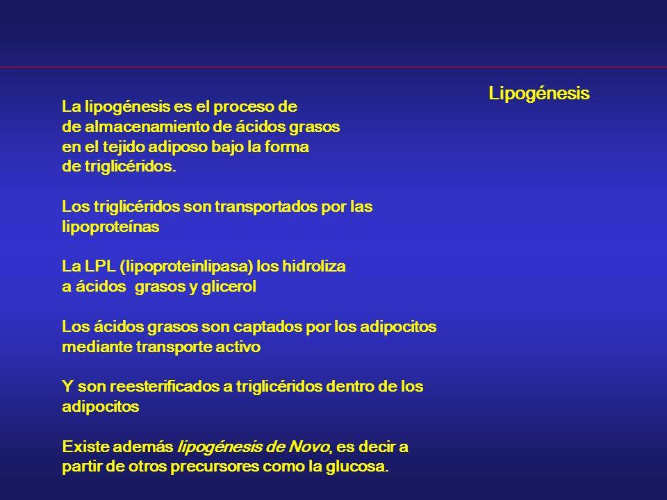 Lipogénesis La lipogénesis es el proceso de