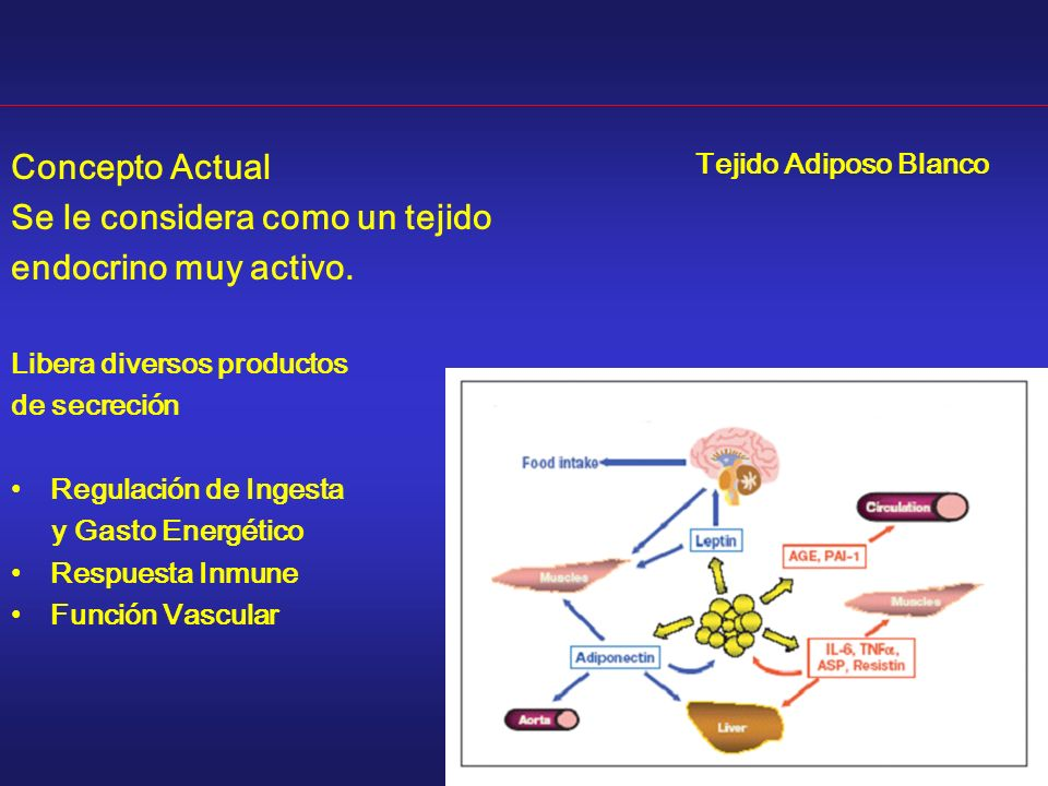 Se le considera como un tejido endocrino muy activo.