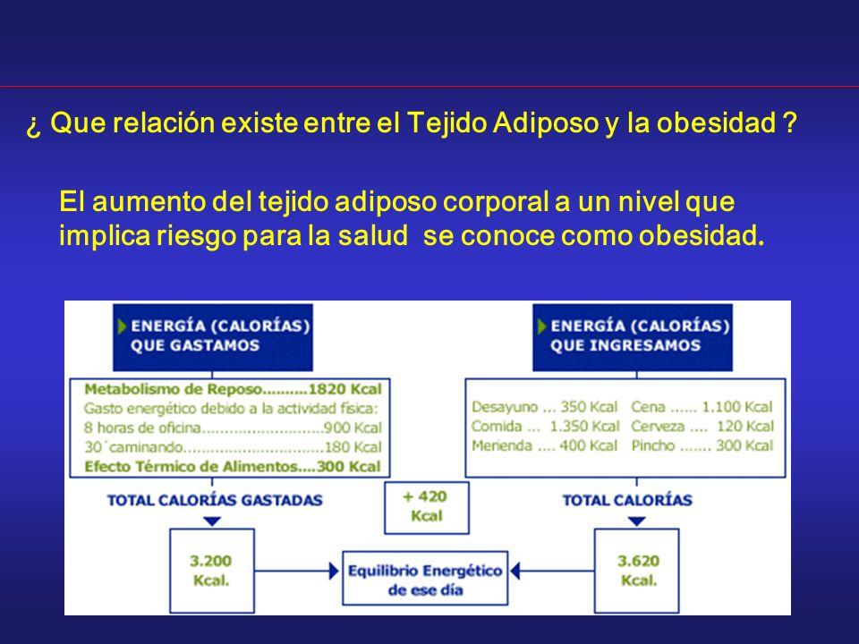 ¿ Que relación existe entre el Tejido Adiposo y la obesidad