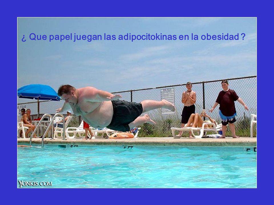 ¿ Que papel juegan las adipocitokinas en la obesidad