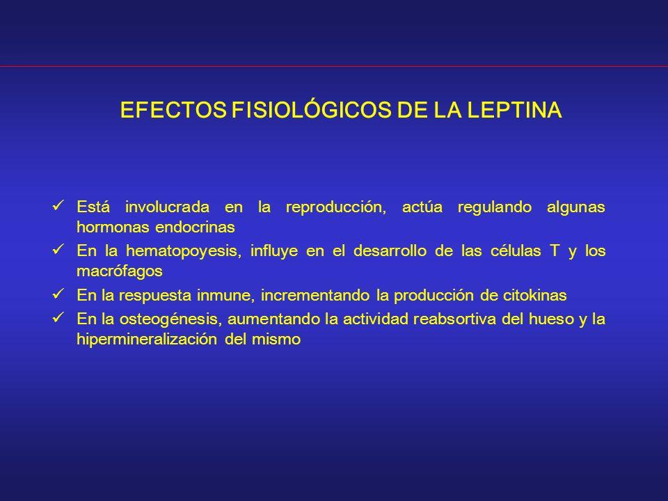 EFECTOS FISIOLÓGICOS DE LA LEPTINA