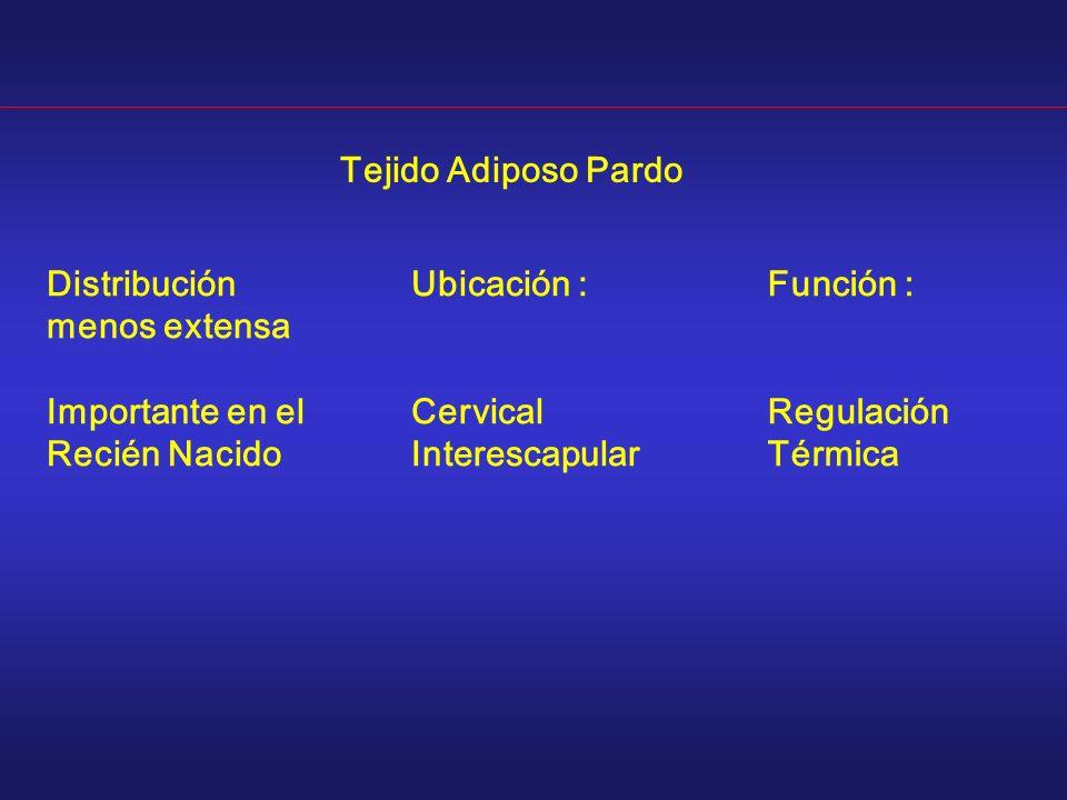 Tejido Adiposo Pardo Distribución menos extensa. Importante en el. Recién Nacido. Ubicación : Cervical.