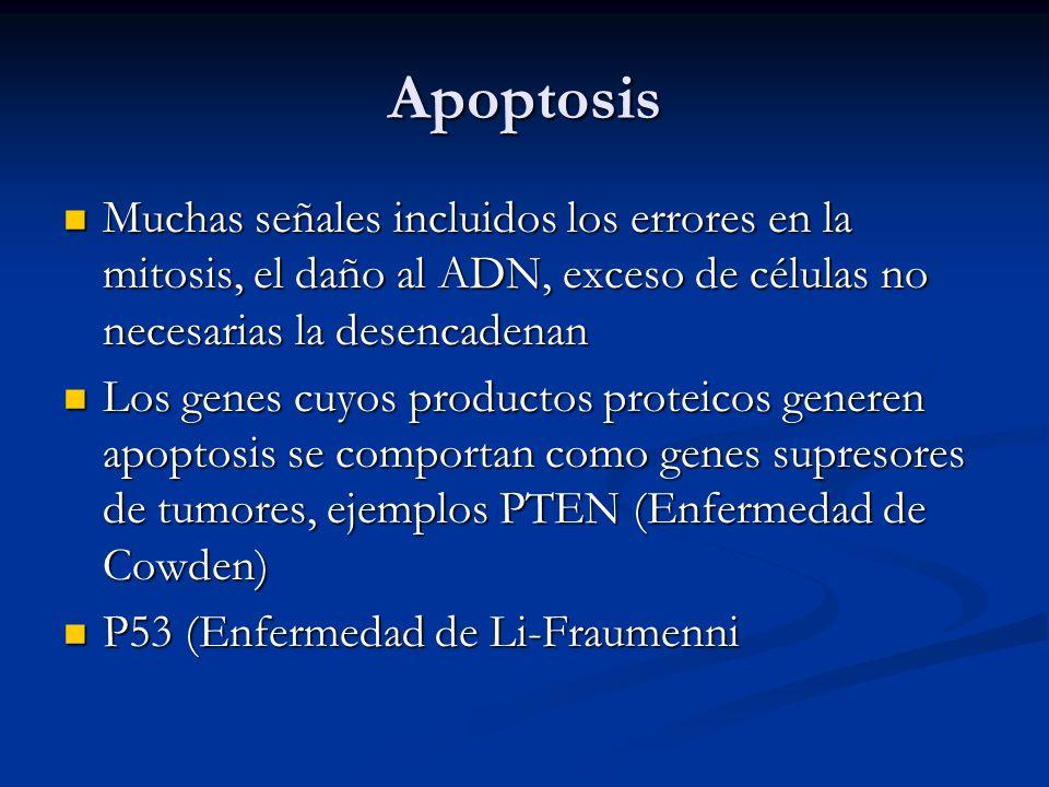 Apoptosis Muchas señales incluidos los errores en la mitosis, el daño al ADN, exceso de células no necesarias la desencadenan.