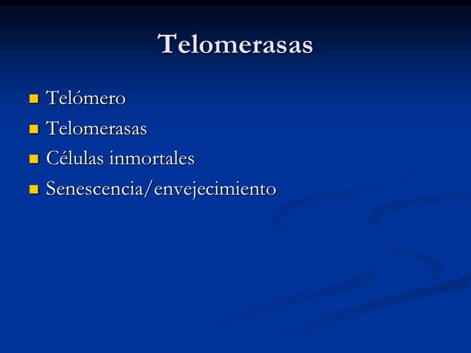 Telomerasas Telómero Telomerasas Células inmortales
