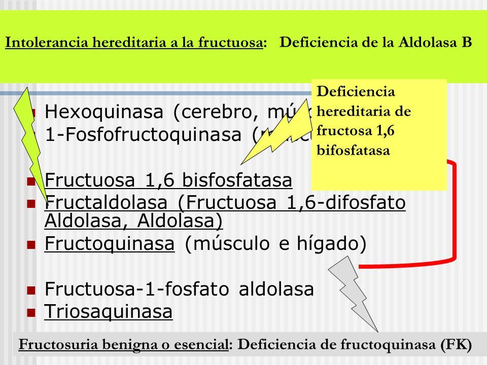 Enzimas del metabolismo de Fructuosa: