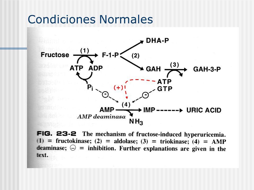 Condiciones Normales (+) AMP deaminasa