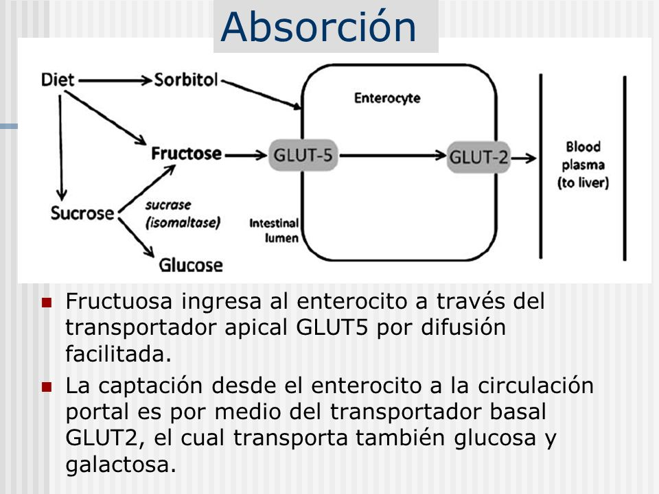 Absorción Fructuosa ingresa al enterocito a través del transportador apical GLUT5 por difusión facilitada.