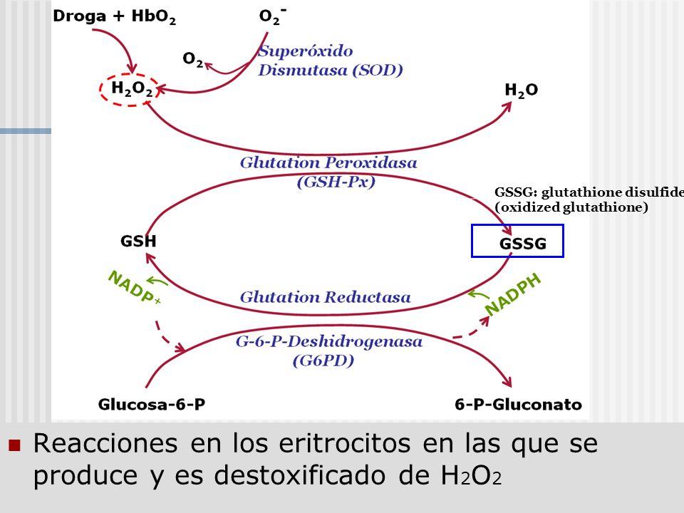 GSSG: glutathione disulfide (oxidized glutathione)