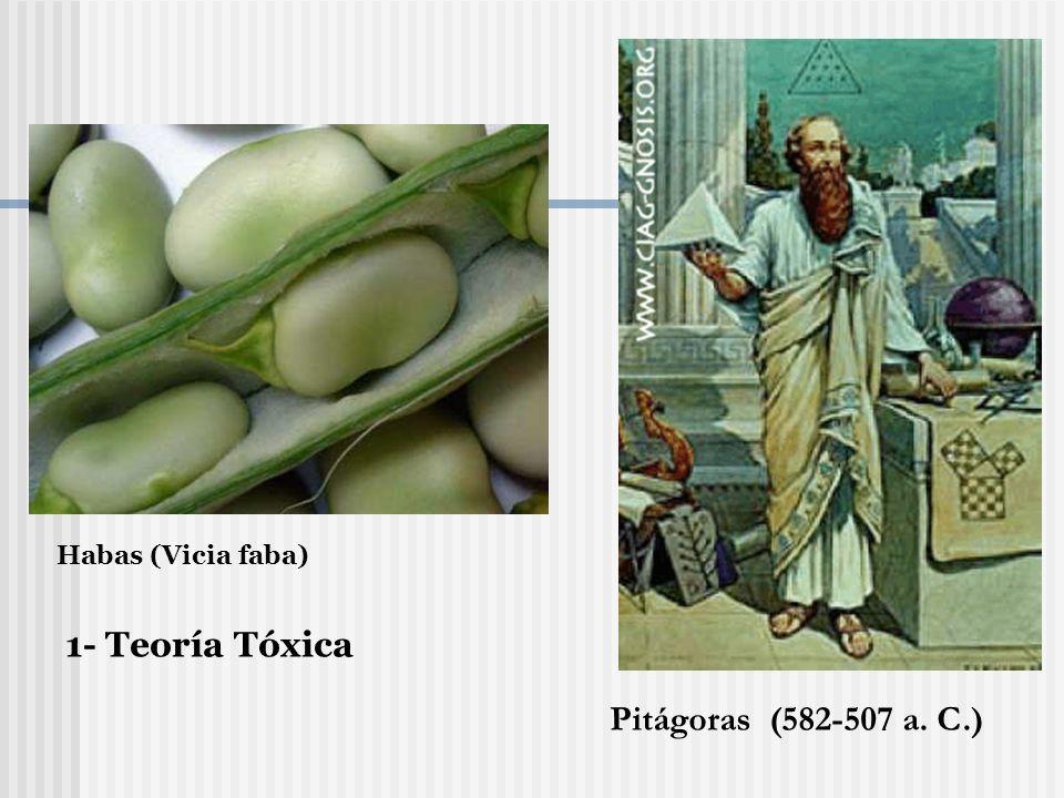 Habas (Vicia faba) 1- Teoría Tóxica Pitágoras (582-507 a. C.)