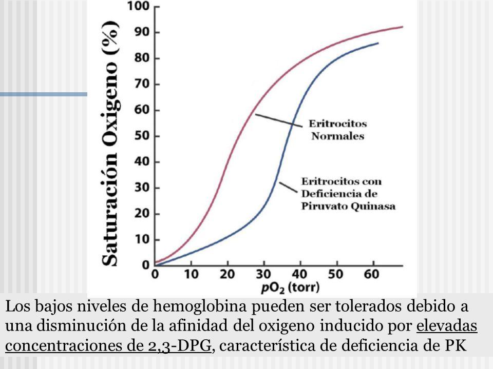 Los bajos niveles de hemoglobina pueden ser tolerados debido a una disminución de la afinidad del oxigeno inducido por elevadas concentraciones de 2,3-DPG, característica de deficiencia de PK