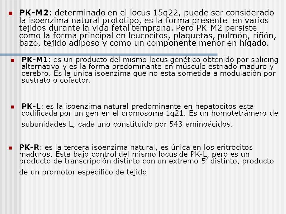 PK-M2: determinado en el locus 15q22, puede ser considerado la isoenzima natural prototipo, es la forma presente en varios tejidos durante la vida fetal temprana. Pero PK-M2 persiste como la forma principal en leucocitos, plaquetas, pulmón, riñón, bazo, tejido adiposo y como un componente menor en hígado.