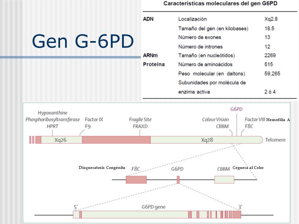 Gen G-6PD Hemofilia A Disqueratosis Congénita Ceguera al Color