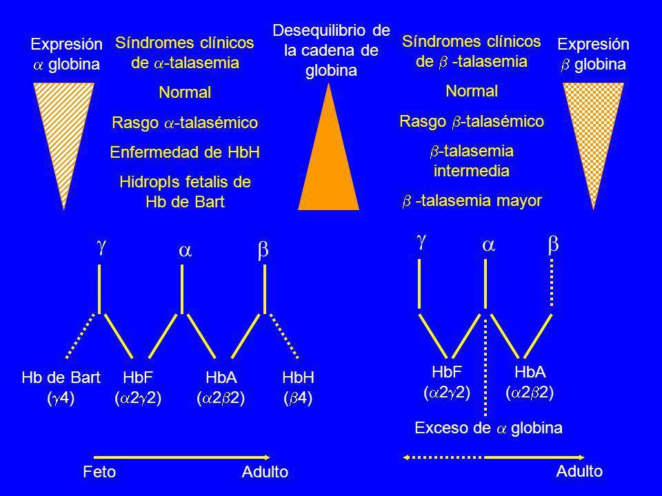       Desequilibrio de la cadena de globina Expresión  globina