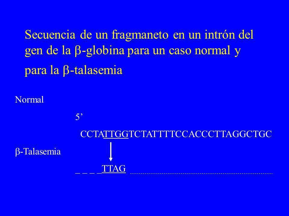 Secuencia de un fragmaneto en un intrón del gen de la -globina para un caso normal y para la -talasemia