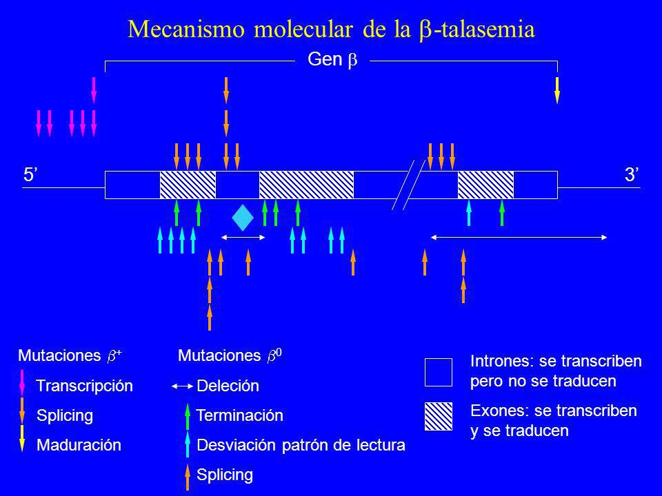 Mecanismo molecular de la -talasemia
