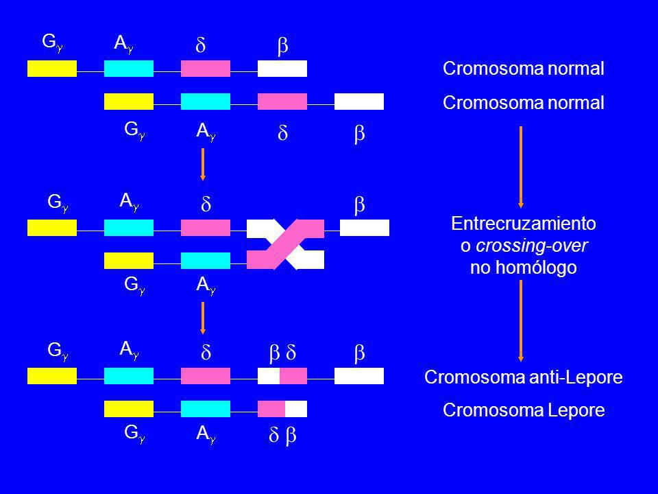             G A Cromosoma normal Cromosoma normal G A