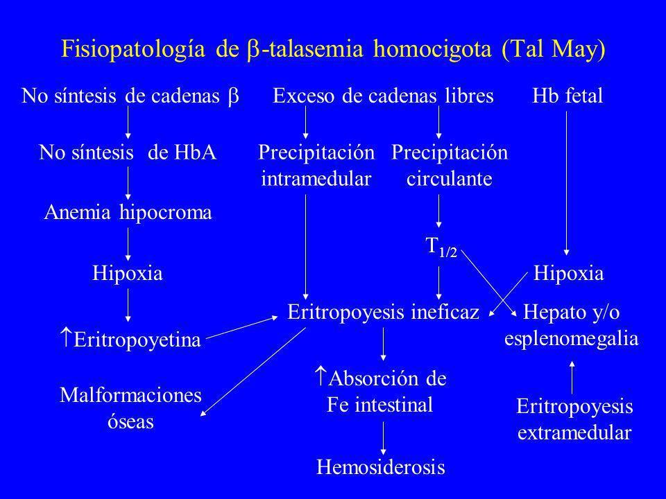 Fisiopatología de -talasemia homocigota (Tal May)