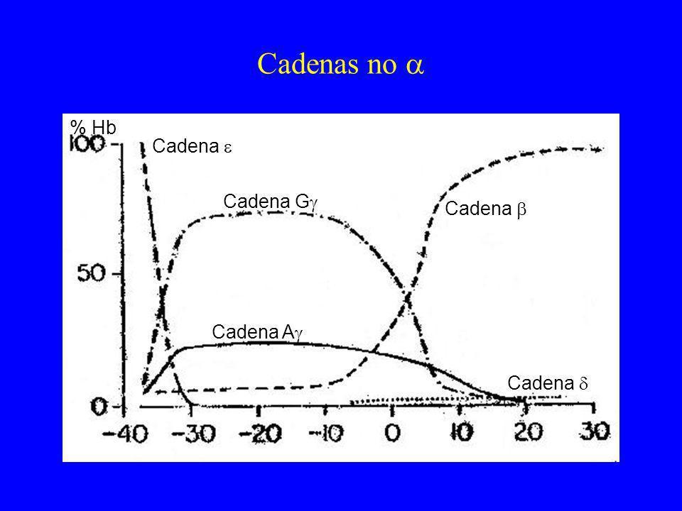 Cadenas no  % Hb Cadena  Cadena G Cadena  Cadena A Cadena 