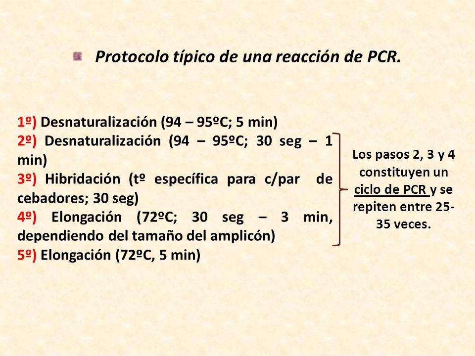 Protocolo típico de una reacción de PCR.