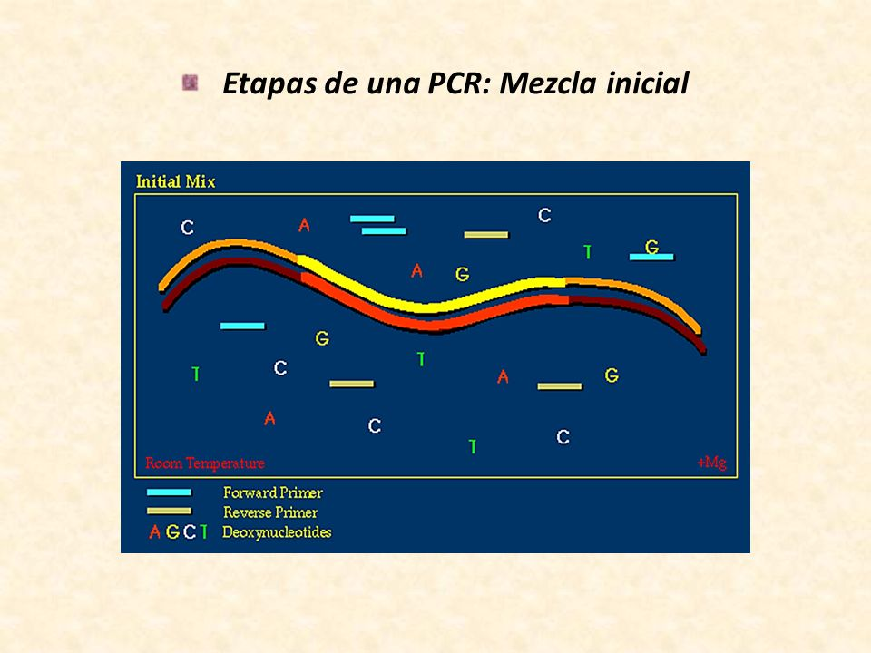 Etapas de una PCR: Mezcla inicial