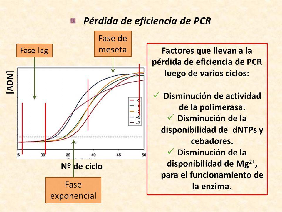 Pérdida de eficiencia de PCR