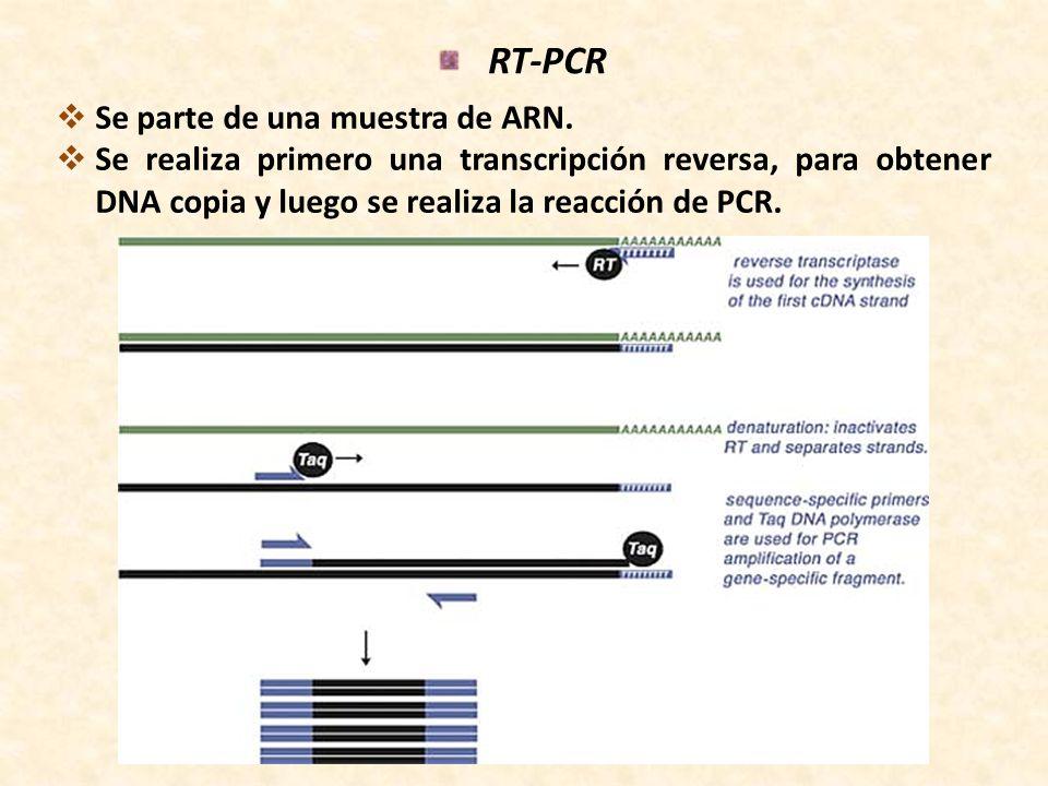 RT-PCR Se parte de una muestra de ARN.