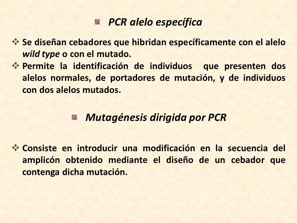 Mutagénesis dirigida por PCR