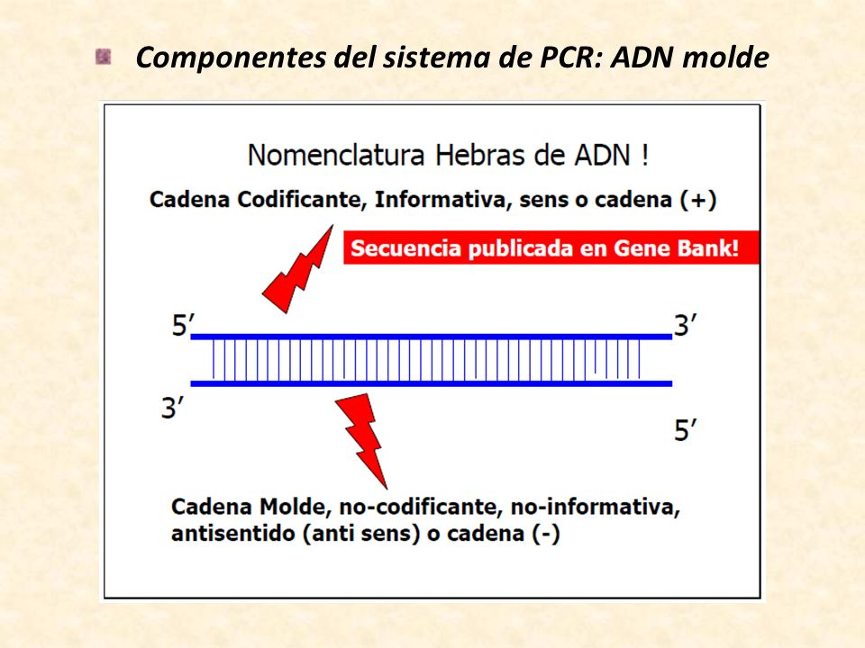 Componentes del sistema de PCR: ADN molde