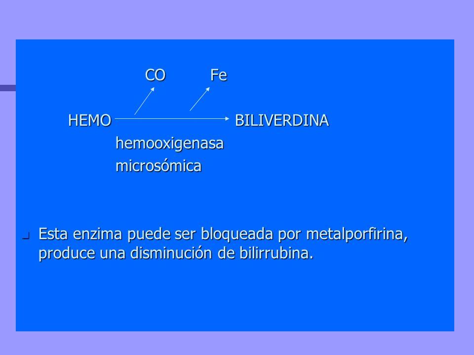 CO Fe HEMO BILIVERDINA. hemooxigenasa. microsómica.