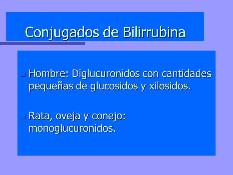 Conjugados de Bilirrubina