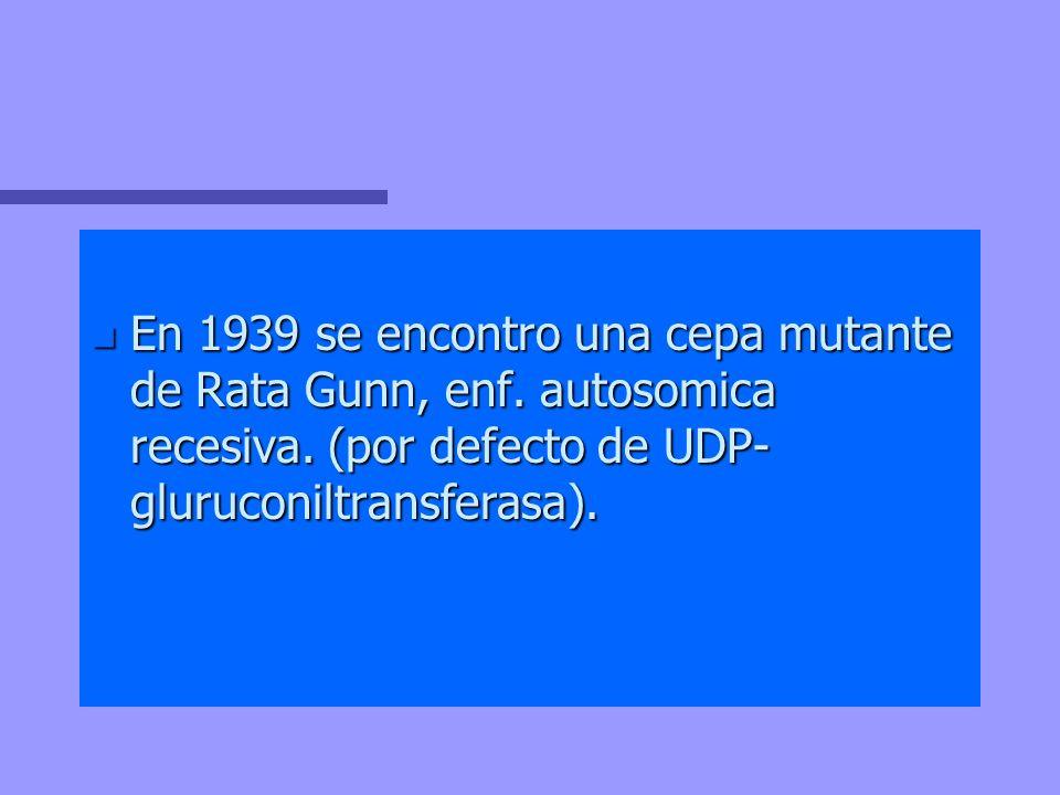 En 1939 se encontro una cepa mutante de Rata Gunn, enf