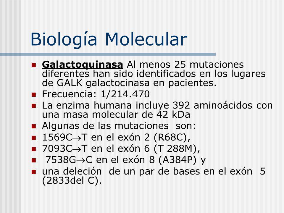 Biología Molecular Galactoquinasa Al menos 25 mutaciones diferentes han sido identificados en los lugares de GALK galactocinasa en pacientes.