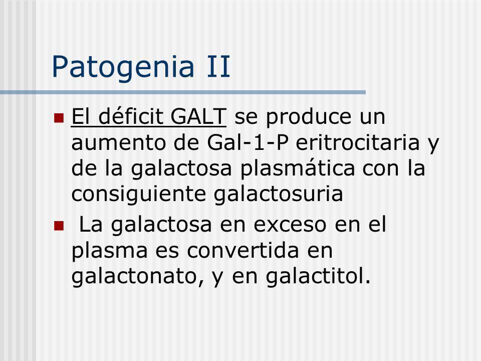 Patogenia II El déficit GALT se produce un aumento de Gal-1-P eritrocitaria y de la galactosa plasmática con la consiguiente galactosuria.