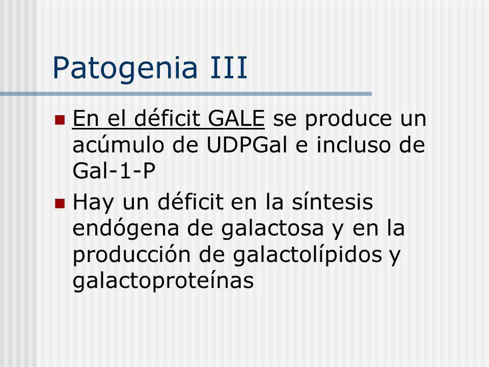 Patogenia III En el déficit GALE se produce un acúmulo de UDPGal e incluso de Gal-1-P.