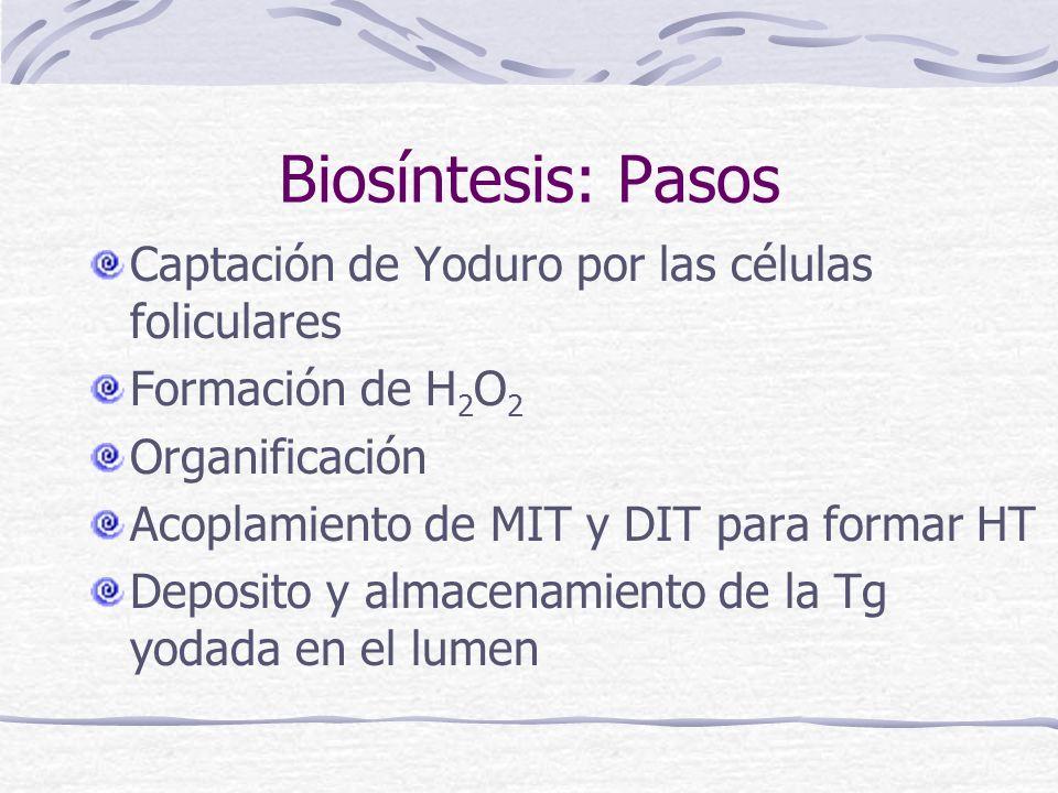 Biosíntesis: Pasos Captación de Yoduro por las células foliculares