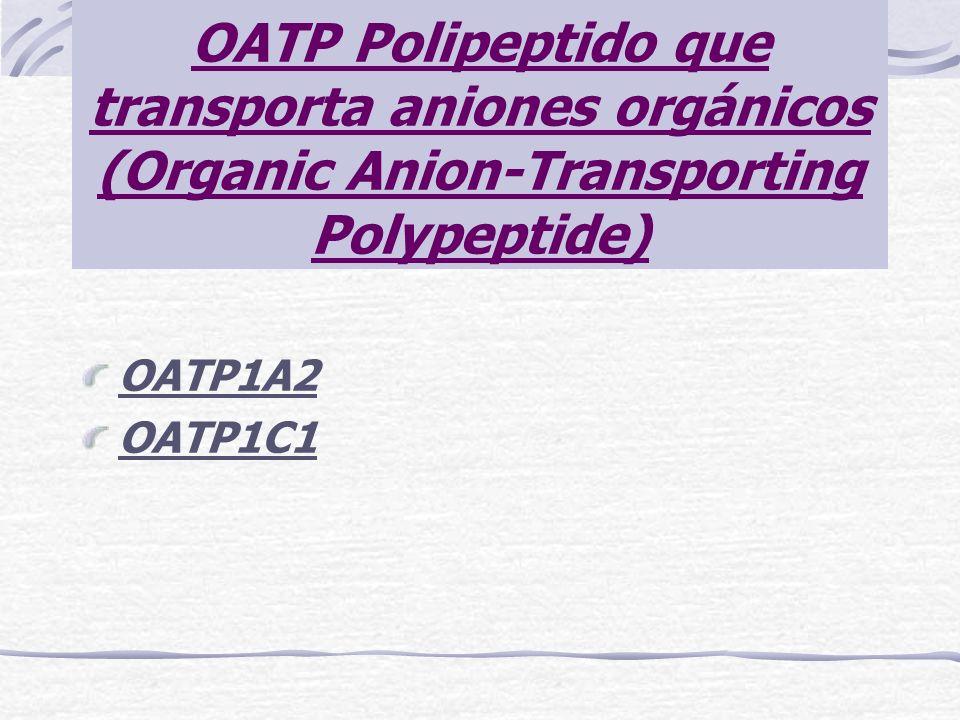 OATP Polipeptido que transporta aniones orgánicos (Organic Anion-Transporting Polypeptide)