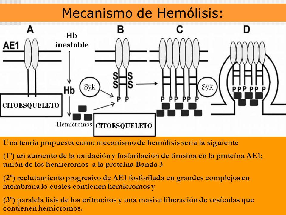 Mecanismo de Hemólisis: