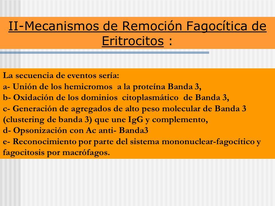 II-Mecanismos de Remoción Fagocítica de Eritrocitos :