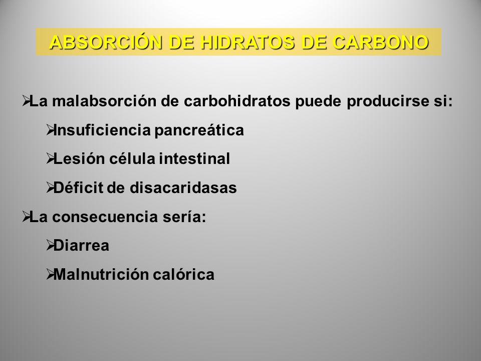 ABSORCIÓN DE HIDRATOS DE CARBONO